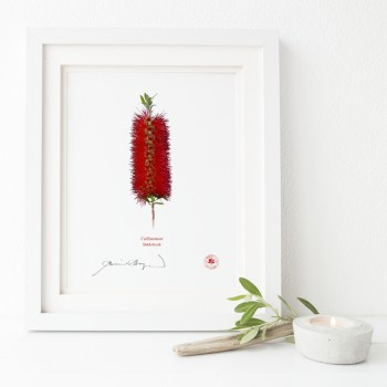010 Bottlebrush (Callistemon) - Flat Print, No Mat