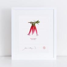 060 Native Fuchsia (Epacris longiflora) - With Mat and Backing