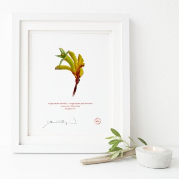 133 Kangaroo Paw (Anigozanthos 'Yellow Gem') - Flat Print, No Mat