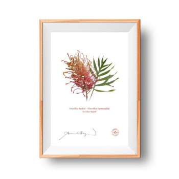 Grevillea Collection 1 Diptych - Flat Prints, No Mats