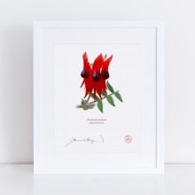 160 Sturt's Desert Pea (Swainsona formosa) - With Mat and Backing