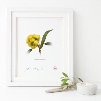 162 Eucalyptus erythrocorys - Flat Print, No Mat
