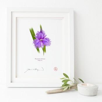 163 Fringe Lily (Thysanotus tuberosus) - Flat Print, No Mat