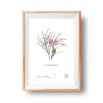 188 Grevillea 'Bulli Princess' - Flat Print, No Mat