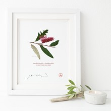 190 Grevillea 'Poorinda Royal Mantle' - Flat Print, No Mat