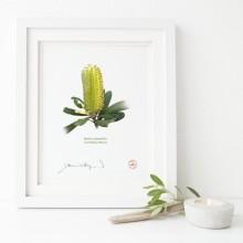 192 Coast Banksia Flower (Banksia integrifolia) - Flat Print, No Mat