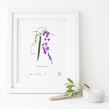 203 Hardenbergia violacea- Flat Print, No Mat