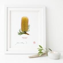 223 Hairpin Banksia (Banksia spinulosa) - Flat Print, No Mat