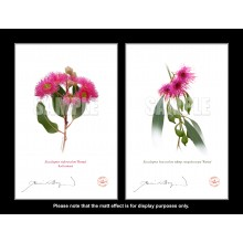 Eucalyptus 'Rosea' Cultivars Diptych - With Mats and Backing