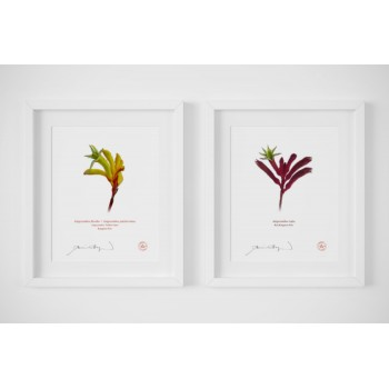 Kangaroo Paw (Anigozanthos) Diptych - With Mats and Backing