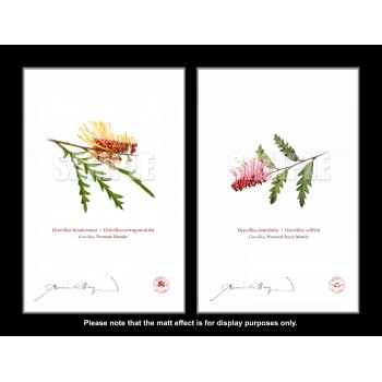 Grevillea Collection 2 Diptych - With Mats and Backing