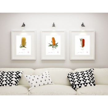 Banksia Flower Collection 1 Triptych