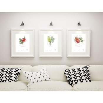 Grevillea Collection 3 Triptych