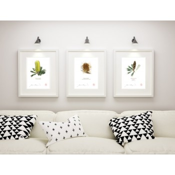 Life of a Banksia Flower Triptych