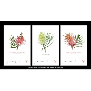Grevillea Collection 3 Triptych - With Mats and Backing