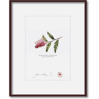 025 Grevillea 'Poorinda Royal Mantle' - 5″ × 7″ Print Ready to Frame With 8″ × 10″ Mat and Backing