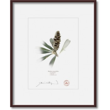 194 Coast Banksia Seed Cone and Leaf (Banksia integrifolia) - 5″×7″ Print Ready to Frame With 8″×10″ Mat and Backing