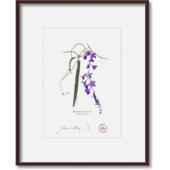 203 Hardenbergia violacea - 5″×7″ Print Ready to Frame With 8″×10″ Mat and Backing