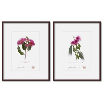 Eucalyptus 'Rosea' Cultivars Diptych - 5″ × 7″ Prints Ready to Frame With 8″ × 10″ Mats and Backing