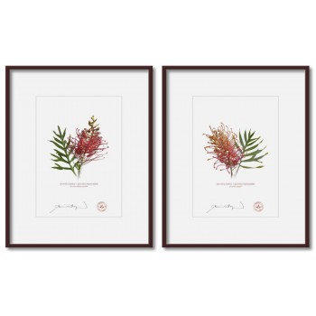 Grevillea Collection 1 Diptych - 5″ × 7″ Prints Ready to Frame With 8″ × 10″ Mats and Backing