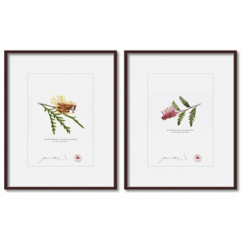 Grevillea Collection 2 Diptych - 5″×7″ Prints Ready to Frame With 8″×10″ Mats and Backing