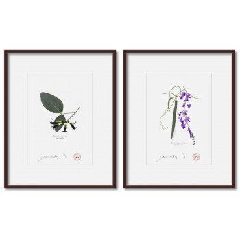 Two Coral Peas Diptych - 5″×7″ Prints Ready to Frame With 8″×10″ Mats and Backing