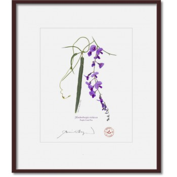 203 Hardenbergia violacea - 8″ × 10″ Print Ready to Frame With 12″ × 14″ Mat and Backing