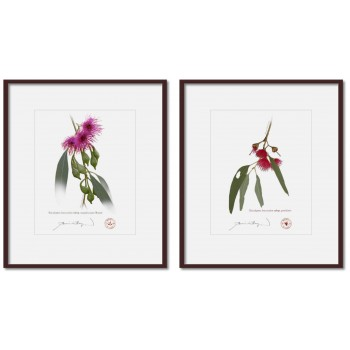 Eucalyptus leucoxylon subspecies Diptych - 8″ × 10″ Prints Ready to Frame With 12″ × 14″ Mats and Backing