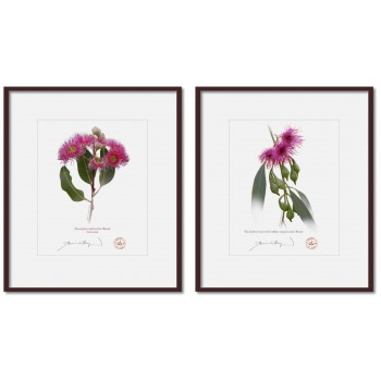 Eucalyptus 'Rosea' Cultivars Diptych - 8″ × 10″ Prints Ready to Frame With 12″ × 14″ Mats and Backing