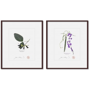 Two Coral Peas Diptych - 8″ × 10″ Prints Ready to Frame With 12″ × 14″ Mats and Backing