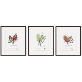 Grevillea Collection 3 Triptych - 8″ × 10″ Prints Ready to Frame With 12″ × 14″ Mats and Backing