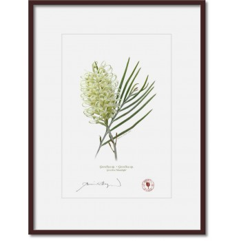 112 Grevillea 'Moonlight' - A4 Print Ready to Frame With 12″ × 16″ Mat and Backing