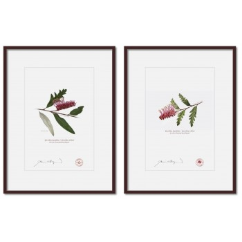 Grevillea 'Poorinda Royal Mantle' Diptych - A4 Prints Ready to Frame With 12″ × 16″ Mats and Backing