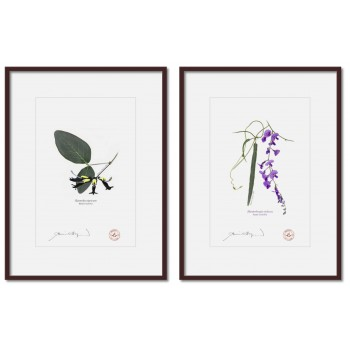 Two Coral Peas Diptych - A4 Prints Ready to Frame With 12″×16″ Mats and Backing