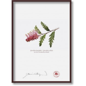 025 Grevillea 'Poorinda Royal Mantle' - 5″ × 7″ Flat Print, No Mat
