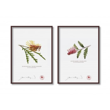 Grevillea Collection 2 Diptych - 5″ × 7″ Flat Prints, No Mats