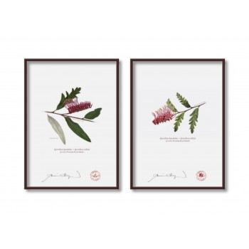 Grevillea 'Poorinda Royal Mantle' Diptych - 5″ × 7″ Flat Prints, No Mats