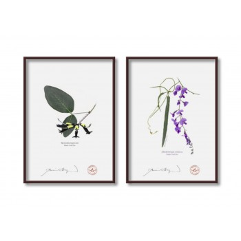 Two Coral Peas Diptych - 5″×7″ Flat Prints, No Mats