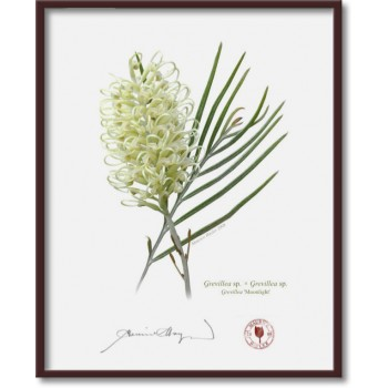 112 Grevillea 'Moonlight' - 8″ × 10″ Flat Print, No Mat
