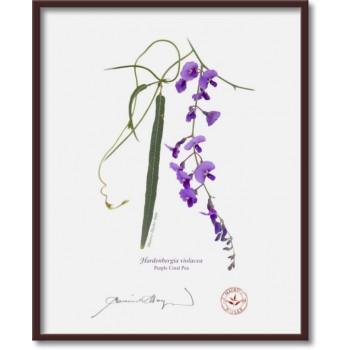 203 Hardenbergia violacea - 8″×10″ Flat Print, No Mat
