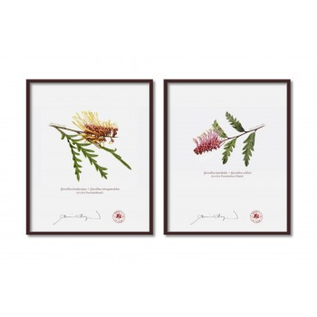 Grevillea Collection 2 Diptych - 8″ × 10″ Flat Prints, No Mats