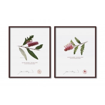 Grevillea 'Poorinda Royal Mantle' Diptych - 8″ × 10″ Flat Prints, No Mats
