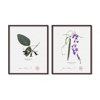 Two Coral Peas Diptych - 8″ × 10″ Flat Prints, No Mats
