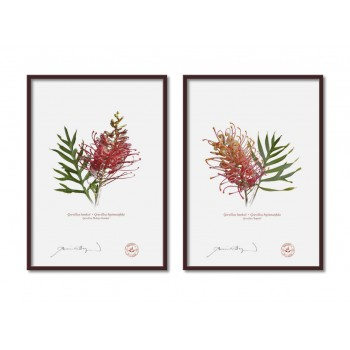 Grevillea Collection 1 Diptych - A4 Flat Prints, No Mats