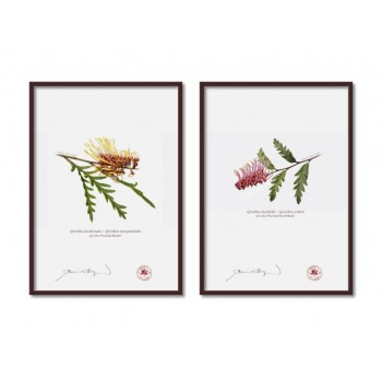 Grevillea Collection 2 Diptych - A4 Flat Prints, No Mats