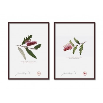 Grevillea 'Poorinda Royal Mantle' Diptych - A4 Flat Prints, No Mats
