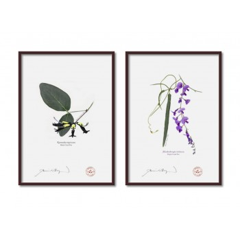 Two Coral Peas Diptych - A4 Flat Prints, No Mats