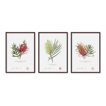 Grevillea Collection 3 Triptych - A4 Flat Prints, No Mats