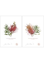 Grevillea Collection 1 Diptych