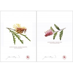 Grevillea Collection 2 Diptych